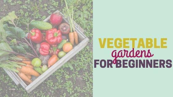 Types of Vegetable Gardens (for Beginners)